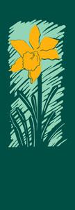 ZOW 022 Daffodil