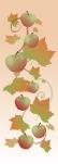 ZOW 1051 Autumn Apples