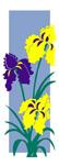 ZOW 107 Iris