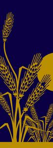ZOW 503 Wheat