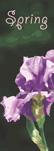 ZOW 904A Bearded Iris