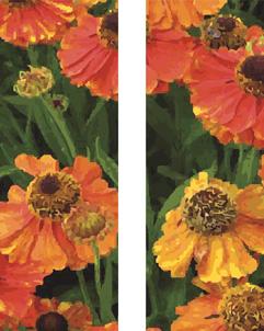 ZOW 905B Orange Poppies
