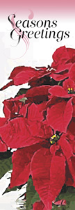 ZOW 906A Potted Poinsettias