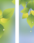 ZOW 946 Summer Leaves & Raindrops