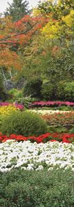 ZOW 980 Spring Garden